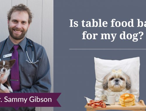 Is Table Food Bad For Your Dog?