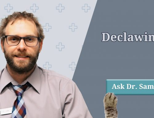Pros & Cons of Declawing Your Cat
