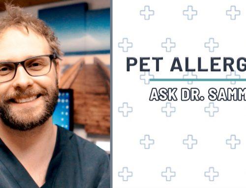 Pet Allergies | Running Nose Part 1