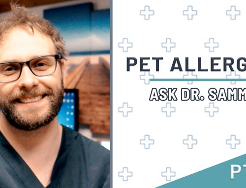 Pet Allergies | Pet Rashes Part 3