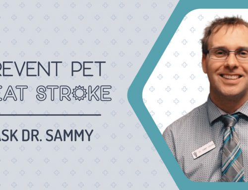 Prevent Pet Heat Strokes