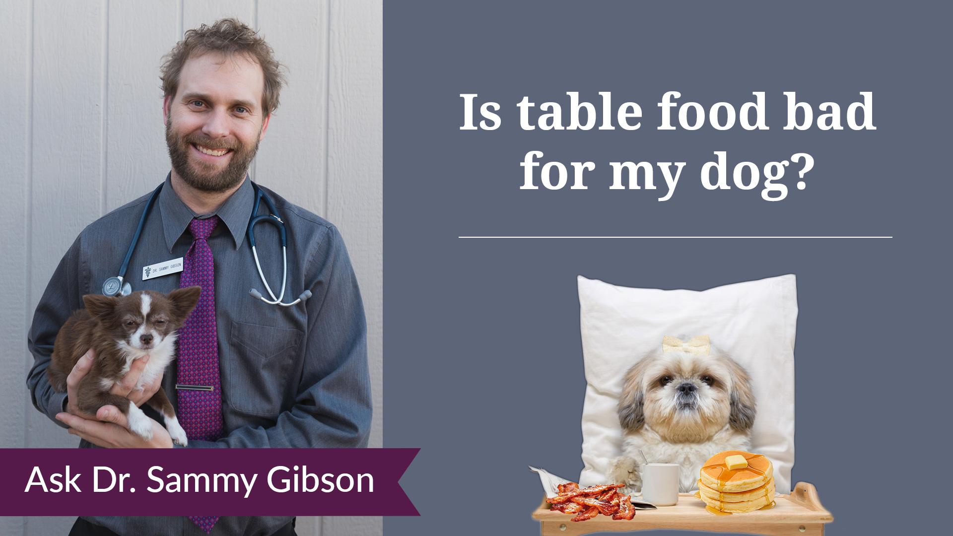 A picture of a dog on a pillow with table of table food