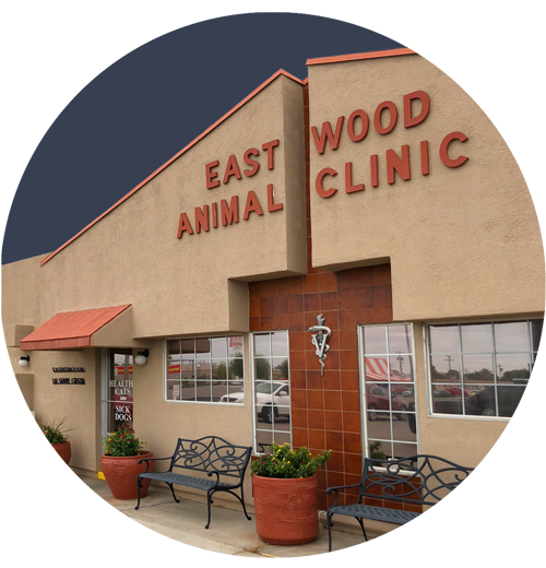 eastwoodanimal clinic