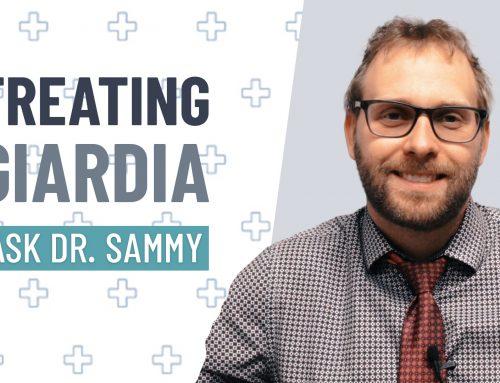 Treating Giardia