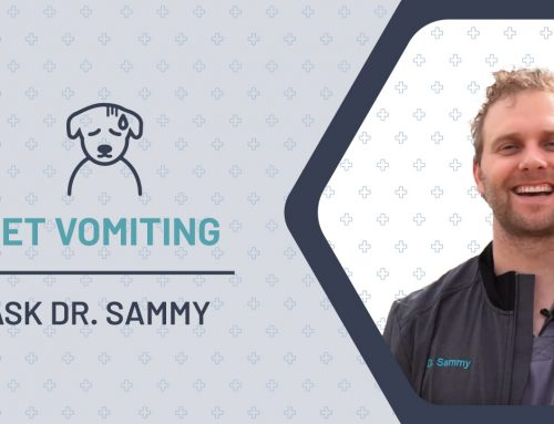 Pet Vomiting